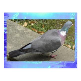 Postcard - A Pigeon