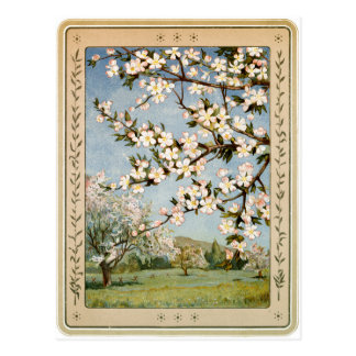 Postcard - Apple Blossoms