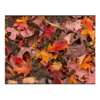 Postcard/Autumn Postcard