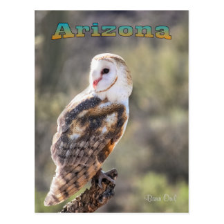 Postcard: Barn Owl #1 (Portrait)