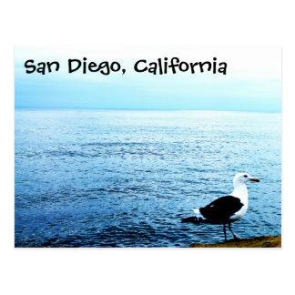 Postcard bird San Diego California blue ocean