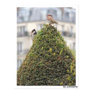 Postcard - birds