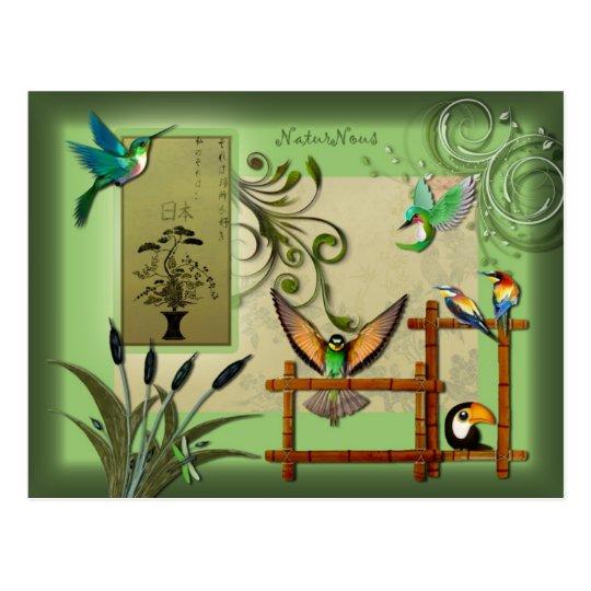 postcard birds nature