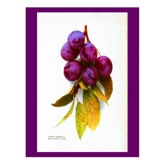 Postcard-Botanicals-Plums Postcard