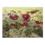 Postcard Bundle of Red
