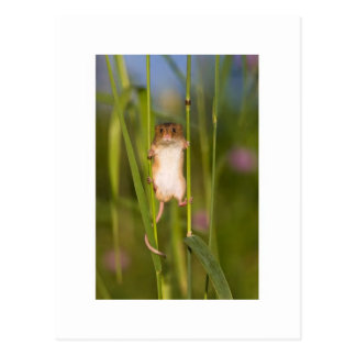 Postcard - Cute Field Mouse