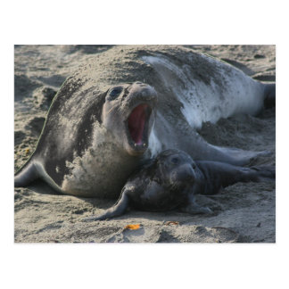 POSTCARD - Elephant Seal