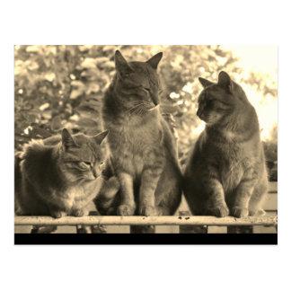 Postcard: Farm Cats Postcard
