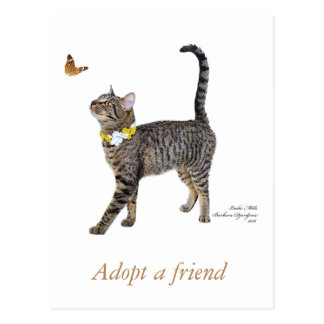 Postcard Featuring Tabatha, the Tabby