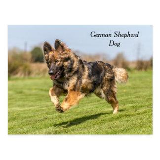Postcard German Shepherd Dog Alsatian