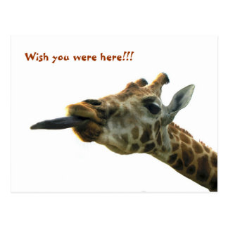 Postcard - Giraffe