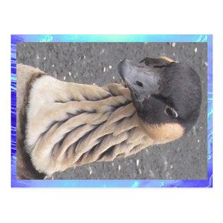 Postcard - Goose