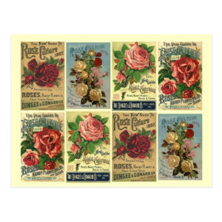 Postcard Heirloom Roses Vintage Rose Culture Ads