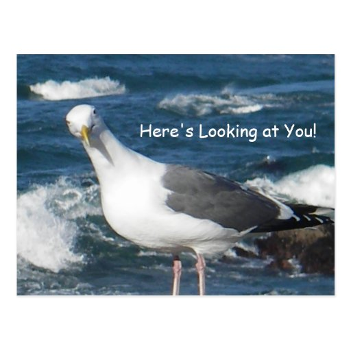 Postcard:  Here's Looking at You Gull
