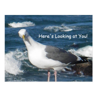 Postcard:  Here's Looking at You Gull Postcard