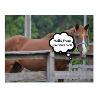 Postcard/Horse Postcard