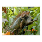 Postcard Iguana Costa Rica