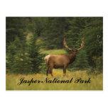 Postcard - Jasper National Park