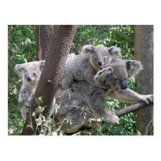 Postcard Koala QLD Australia