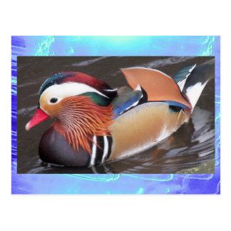 Postcard- Mandarin Duck Postcard