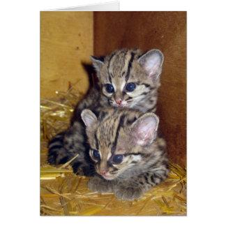 Postcard margay kittens greeting card
