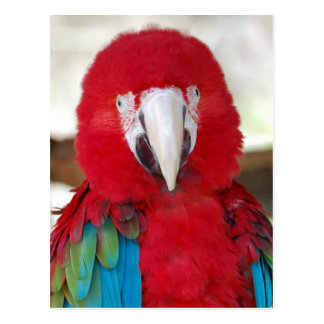 Postcard of a Beautiful Macaw Parrot