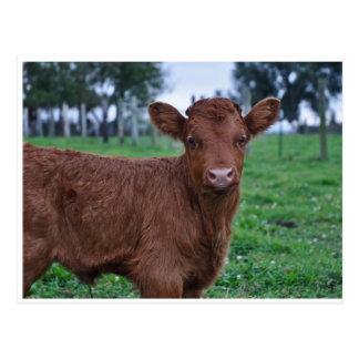 Postcard of calf. Rainbow.