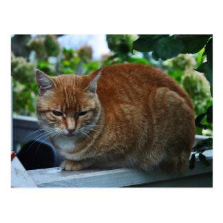 Postcard of Cat. Lulu.