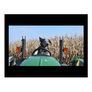 Postcard  of  Dog on Tractor.