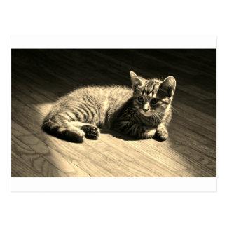 Postcard  of Kitten