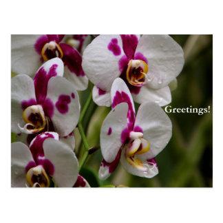 Postcard - Orchid