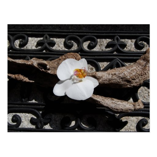 Postcard orchid and ornamentation