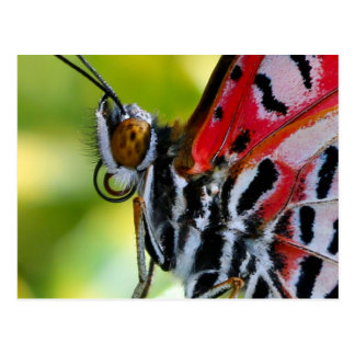 Postcard/Painted Lady Butterfly Postcard