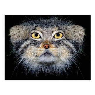 Postcard - pallas' cat