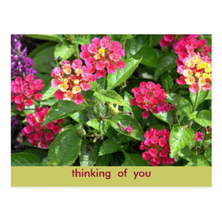 "POSTCARD ""PINK FLORAL/THINKING OF YOU"""