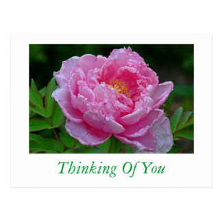 "POSTCARD, ""PINK PEONY/THINKING OF YOU"" POSTCARD"
