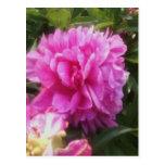 Postcard Pretty Pink Flower