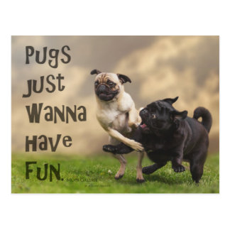 "Postcard ""Pugs just wanna have fun """