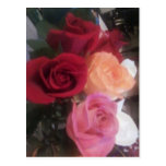 Postcard Rainbow of Roses