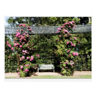 Postcard Rose trees