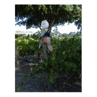 Postcard, Scarecrow at Peachy Canyon Winery