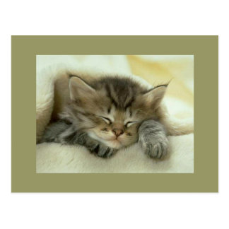 Postcard sleeping tabby kitten