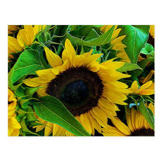 postcard sunflowers