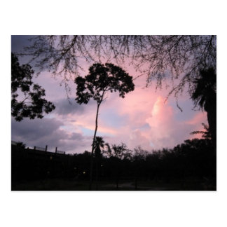 Postcard Sunset Disney World Florida