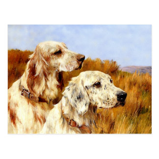 Postcard: Two Setters by Arthur Wardle Postcard
