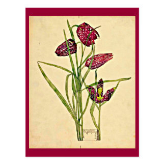 Postcard-Vintage Art-Charles Rennie Mackintosh 18 Postcard