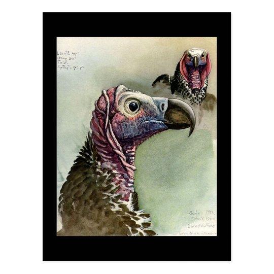 Postcard-Vintage Chicago Art-Abyssinian Birds 15 Postcard