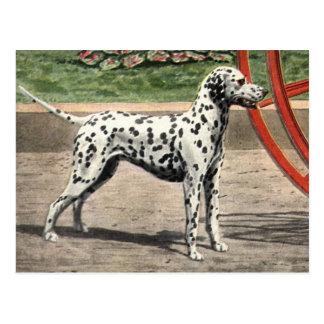Postcard-Vintage Dalmatian Picture Postcard