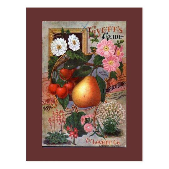 Postcard - Vintage Floral Fruit illustration