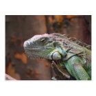 Postcard with colourful Iguana lizard